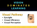 The visual pathway is explained